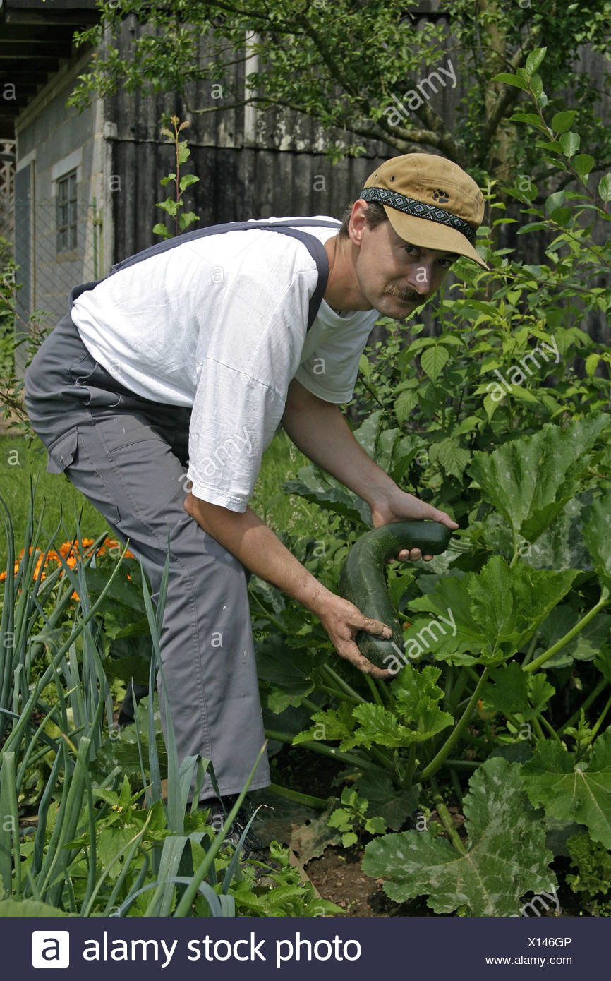 Gardener works in an ecological country garden, growing of vegetables in the own garden Stock Photo