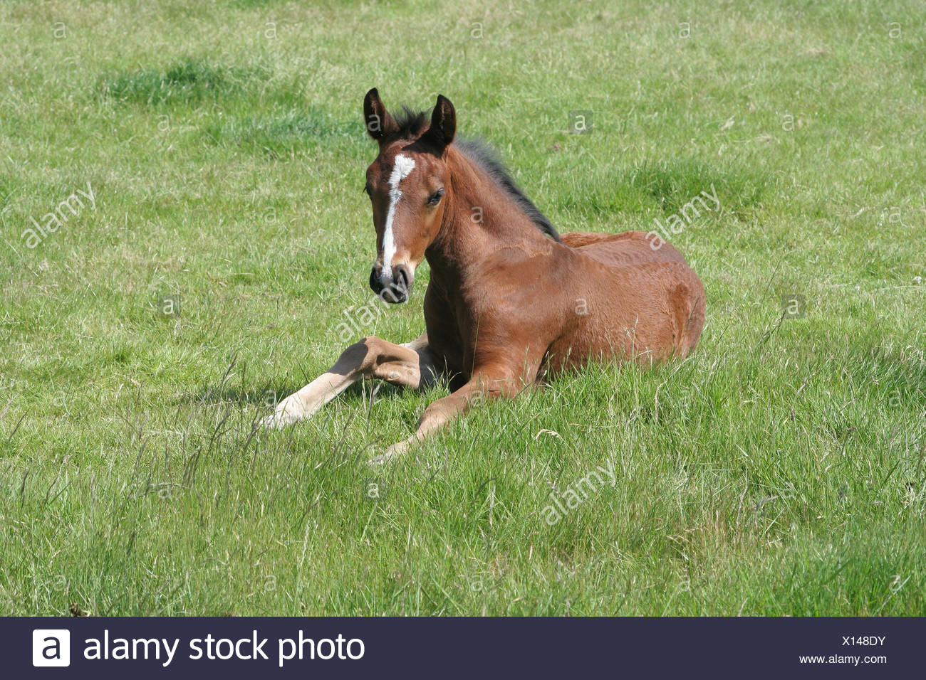 Horse Cub Baby Foal Young Younger Horse Pet Brown Brownish Brunette Stock Photo Alamy