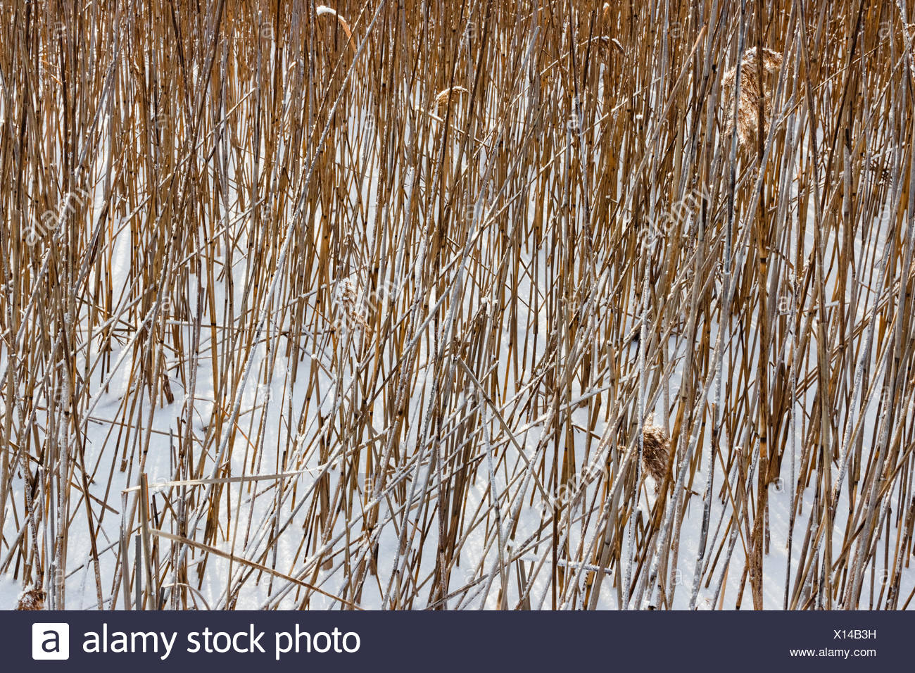 Dried plants. - Stock Image