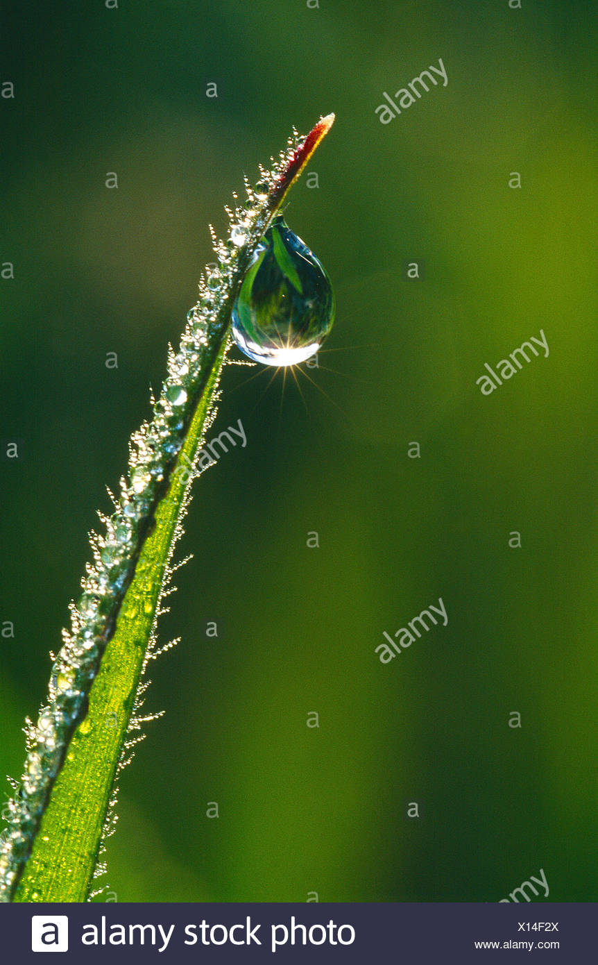 Close up of water drop on blade of grass. - Stock Image