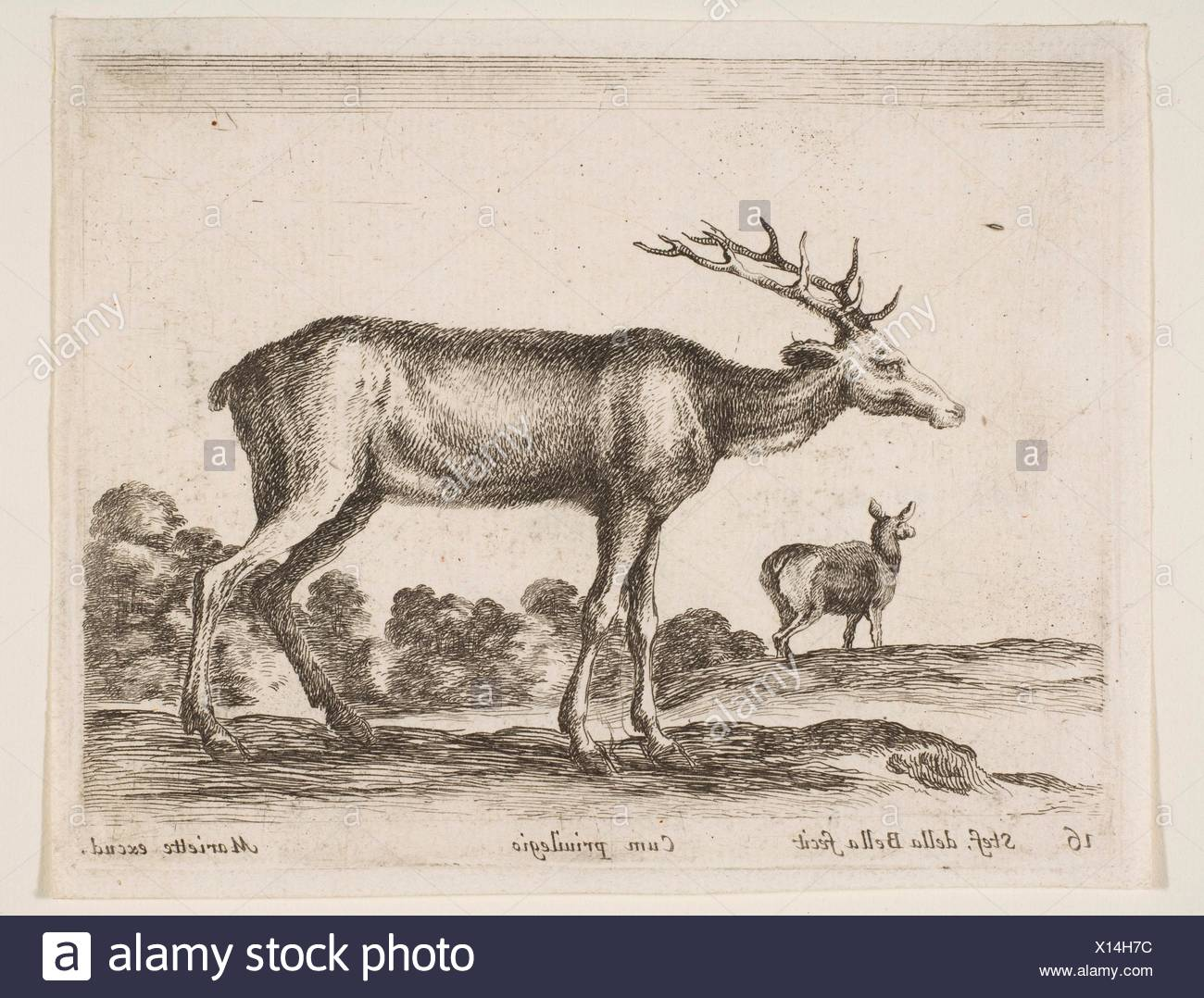 Plate 16: stag, from 'Various animals' (Diversi animali). Series/Portfolio: 'Various animals' (Diversi animali); Artist: Stefano della Bella - Stock Image