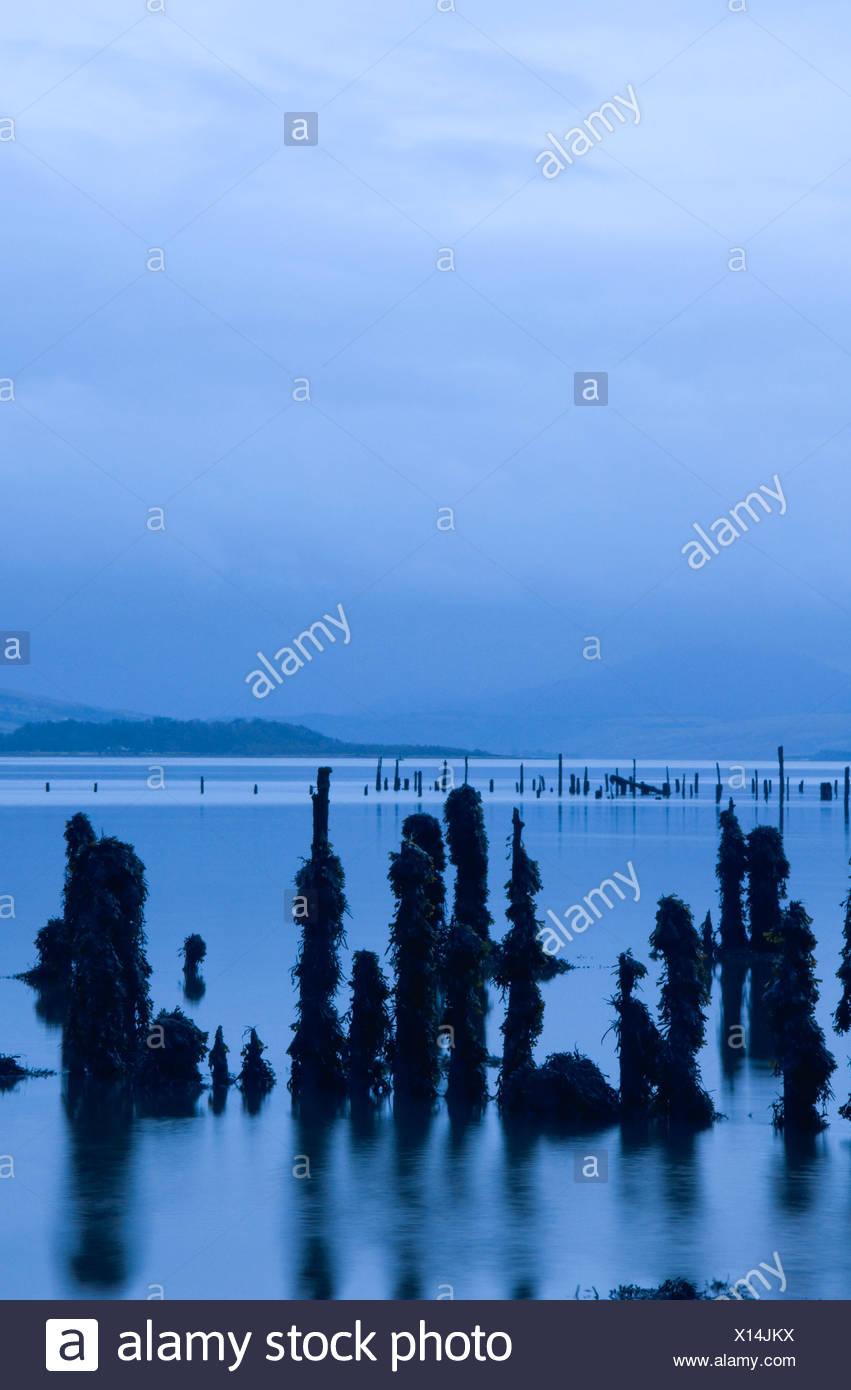 Wooden post in sea. Port Glasgow Strathclyde Scotland U.K. - Stock Image