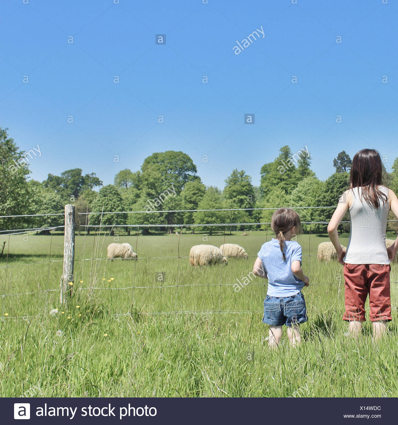 Two girls looking at sheep in a field - Stock Image