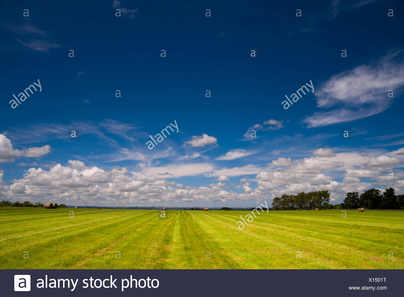 New Zealand; A Farm Field - Stock Image