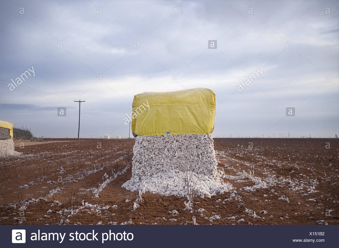 A bale of cotton sits waiting to be taken to the gin. - Stock Image