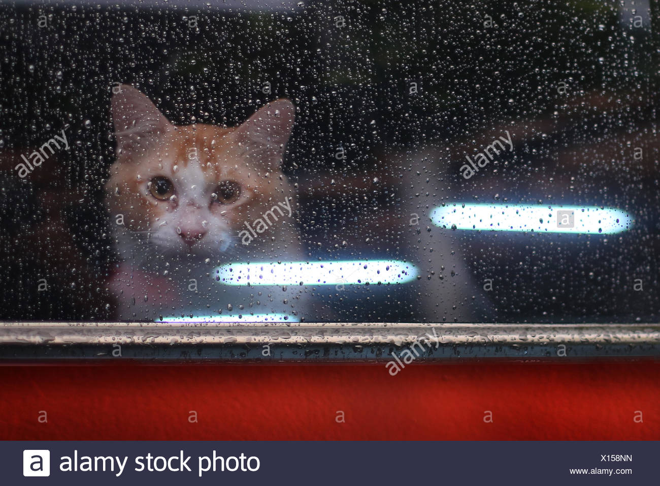Cat looking through window - Stock Image
