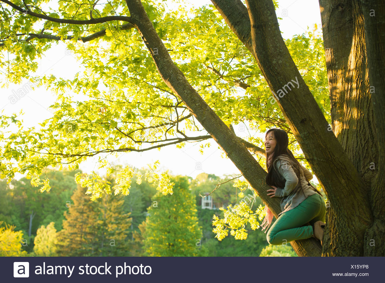 Young female climbing tree in park - Stock Image