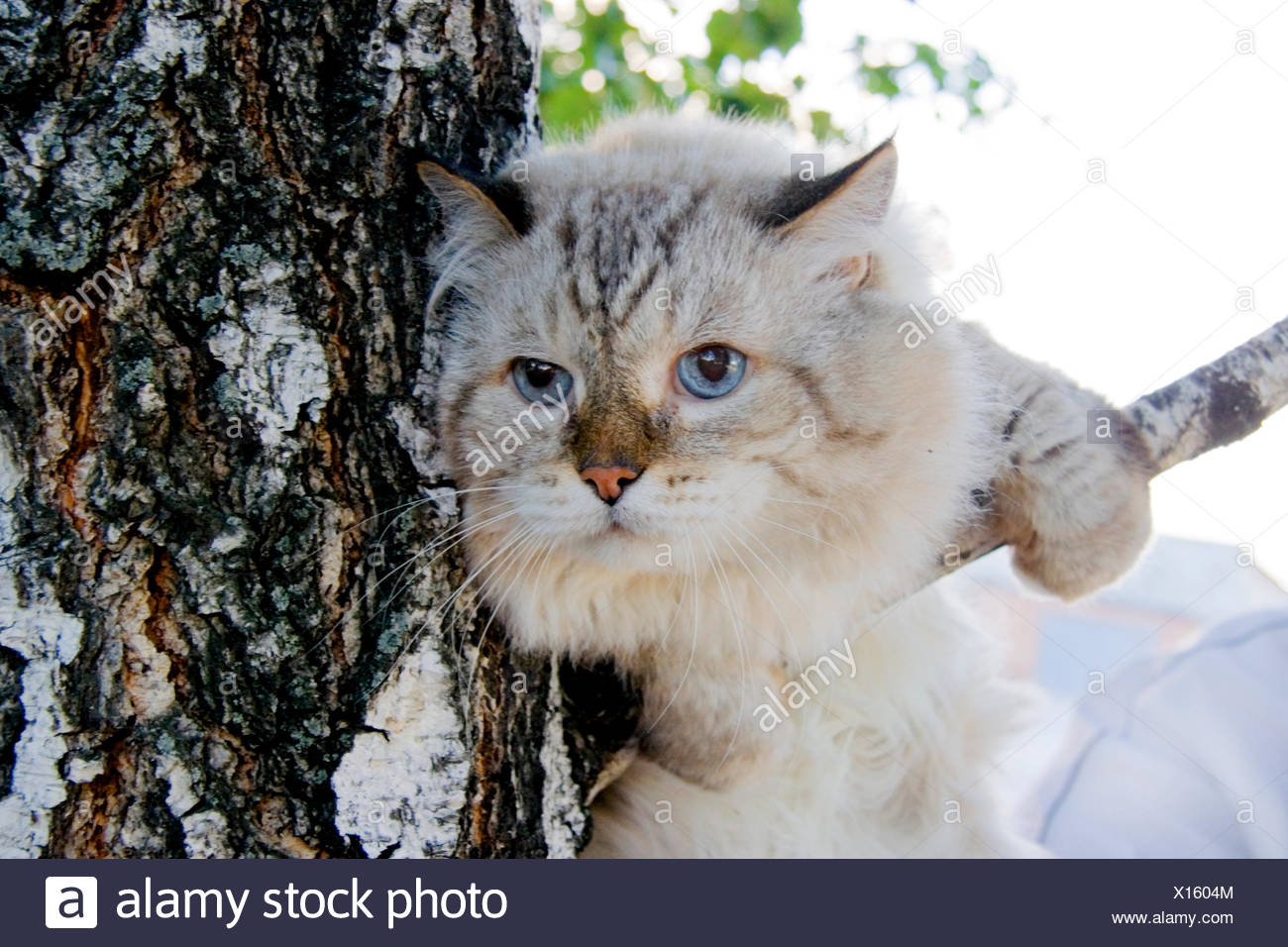 Cat Rescues Essex
