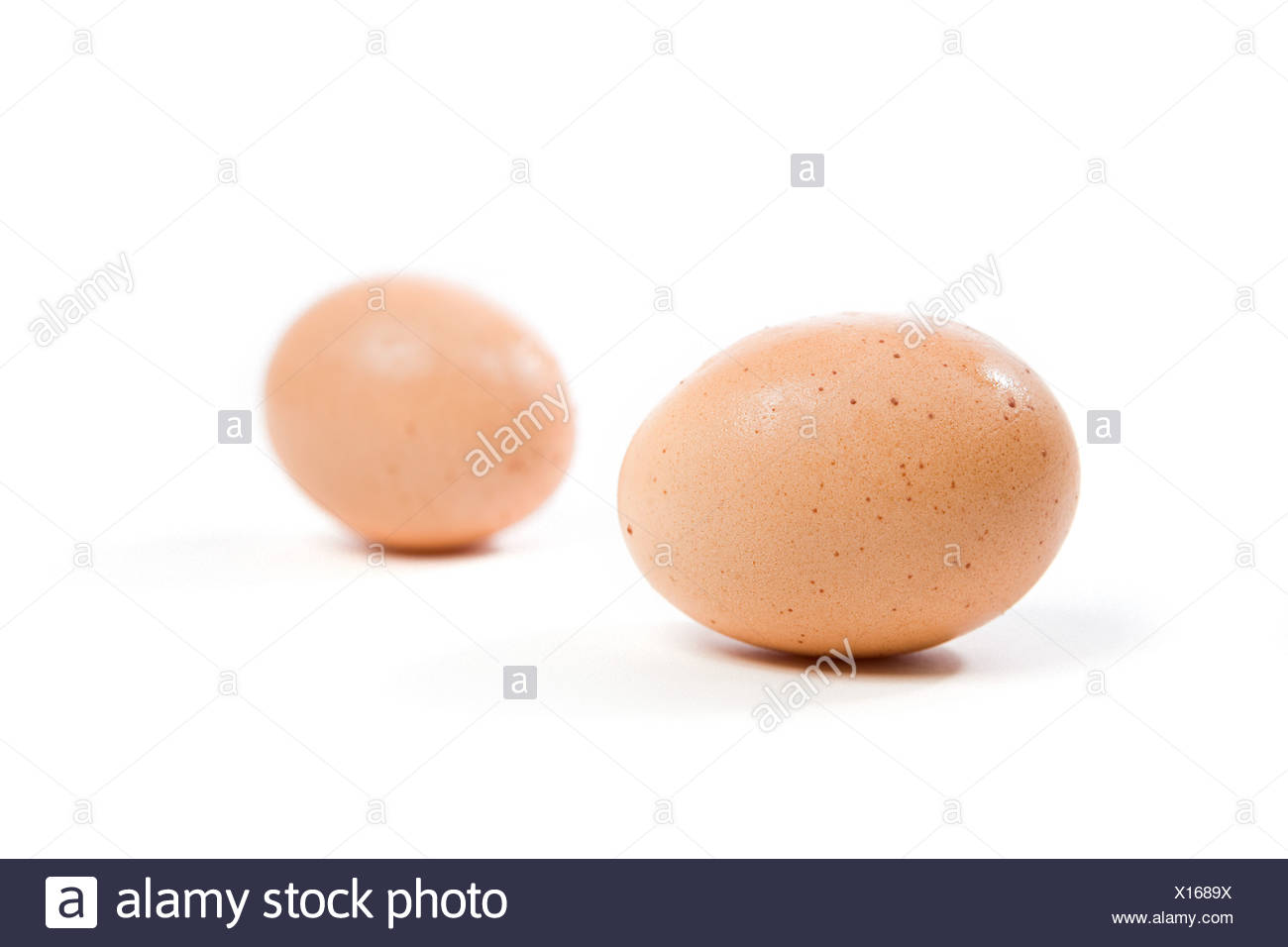 Two eggs - Stock Image