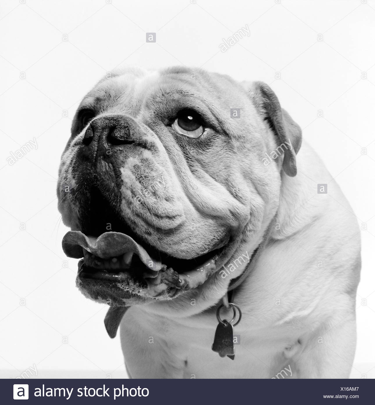 Dog Mouth Open Black and White Stock Photos & Images - Alamy