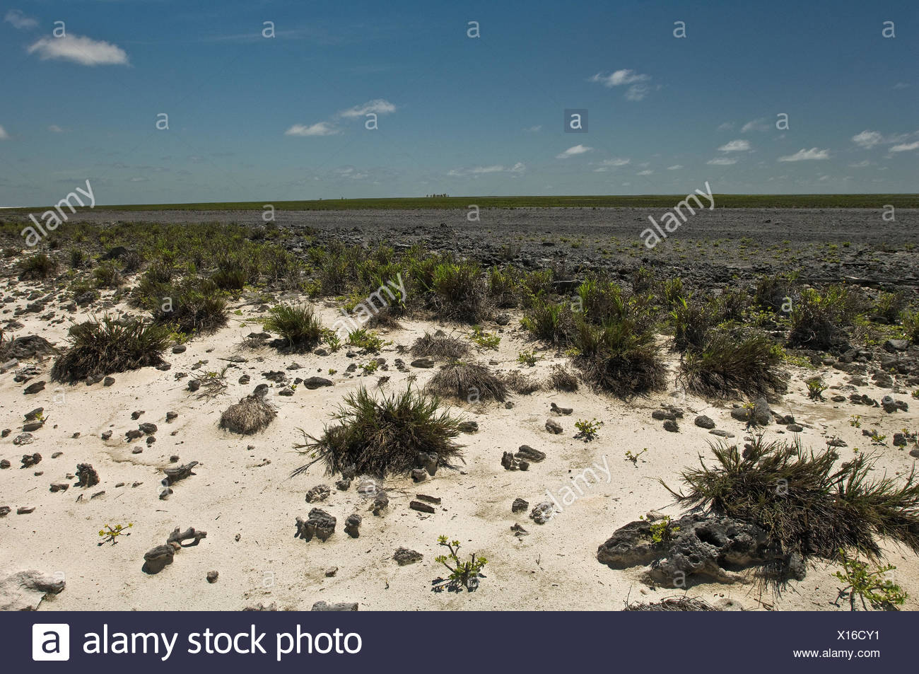 New vegetation on Starbuck Island in the Southern Line Islands. - Stock Image