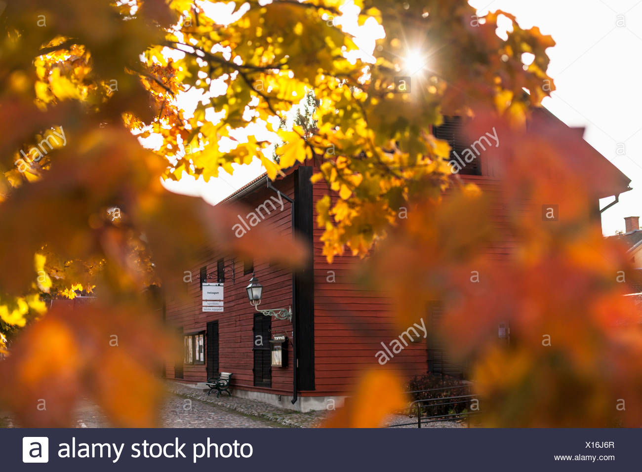 Autumn leaves with house in background - Stock Image