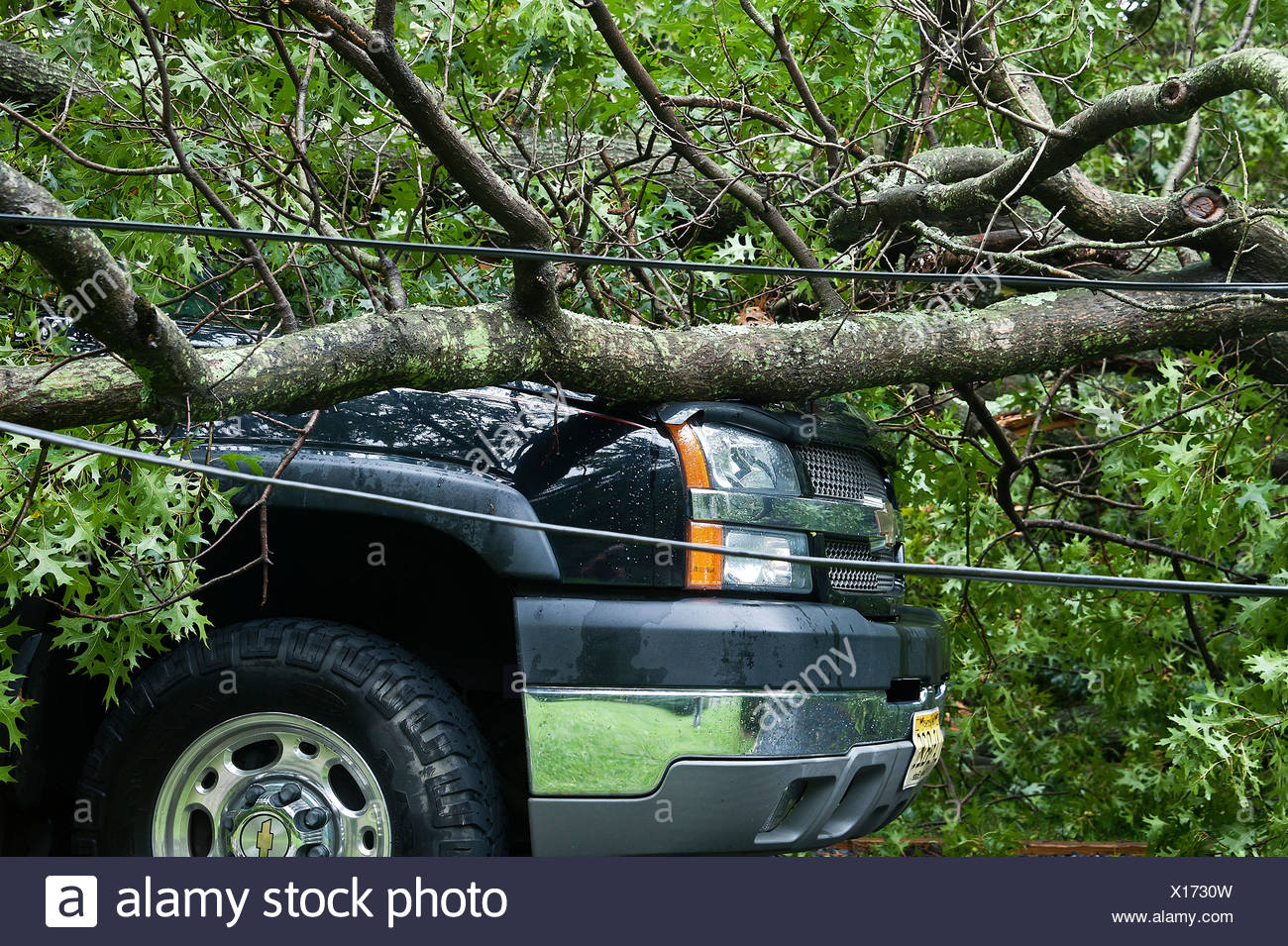 Auto damage caused by fallen tree in storm. - Stock Image
