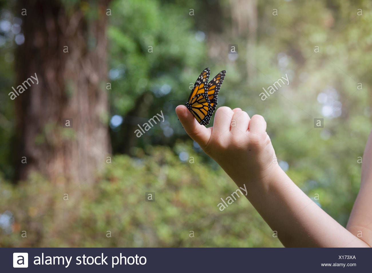 7e78a3fd2 Girls holding monarch butterfly on finger Stock Photo: 276137298 - Alamy