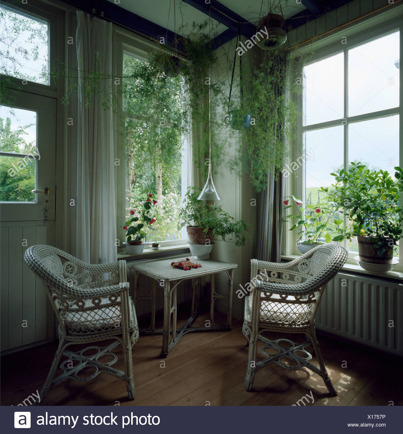 White wicker chairs and trailing houseplants in small cottage living ...