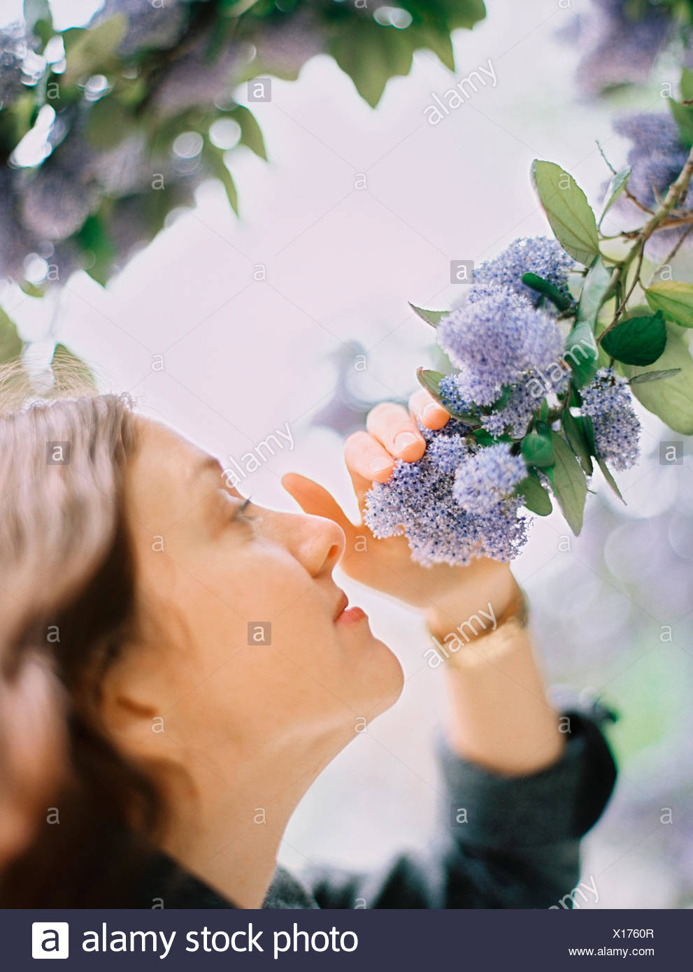 A woman pulling blue flowers towards her to inhale the scent. - Stock Image