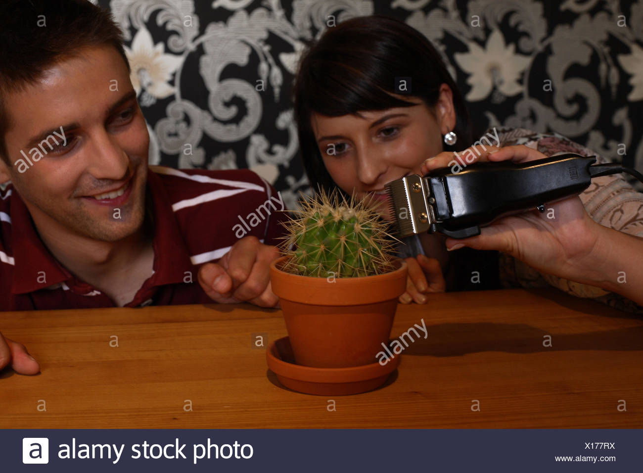 young couple fooling around shaving a cactus - Stock Image