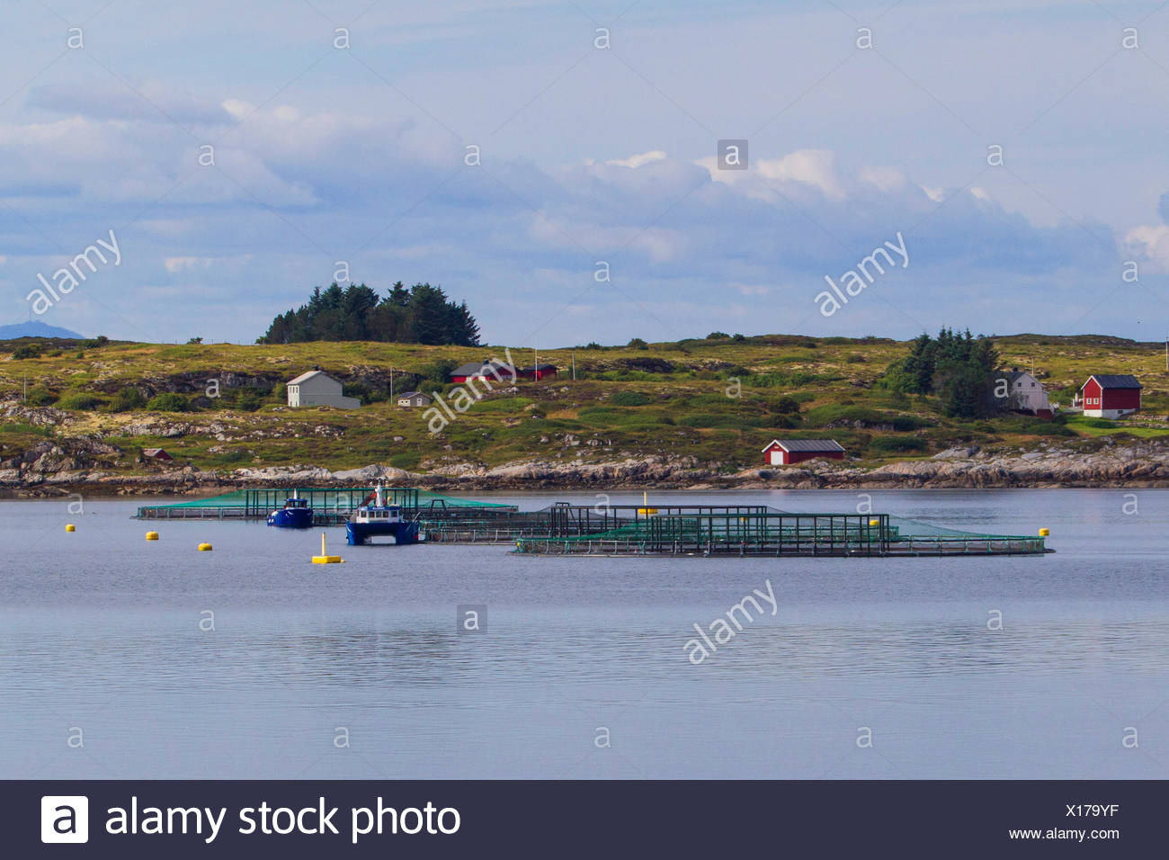 Atlantic salmon, ouananiche, lake Atlantic salmon, landlocked salmon, Sebago salmon (Salmo salar), salmonid farm in a fjord, Norway, Hitra - Stock Image