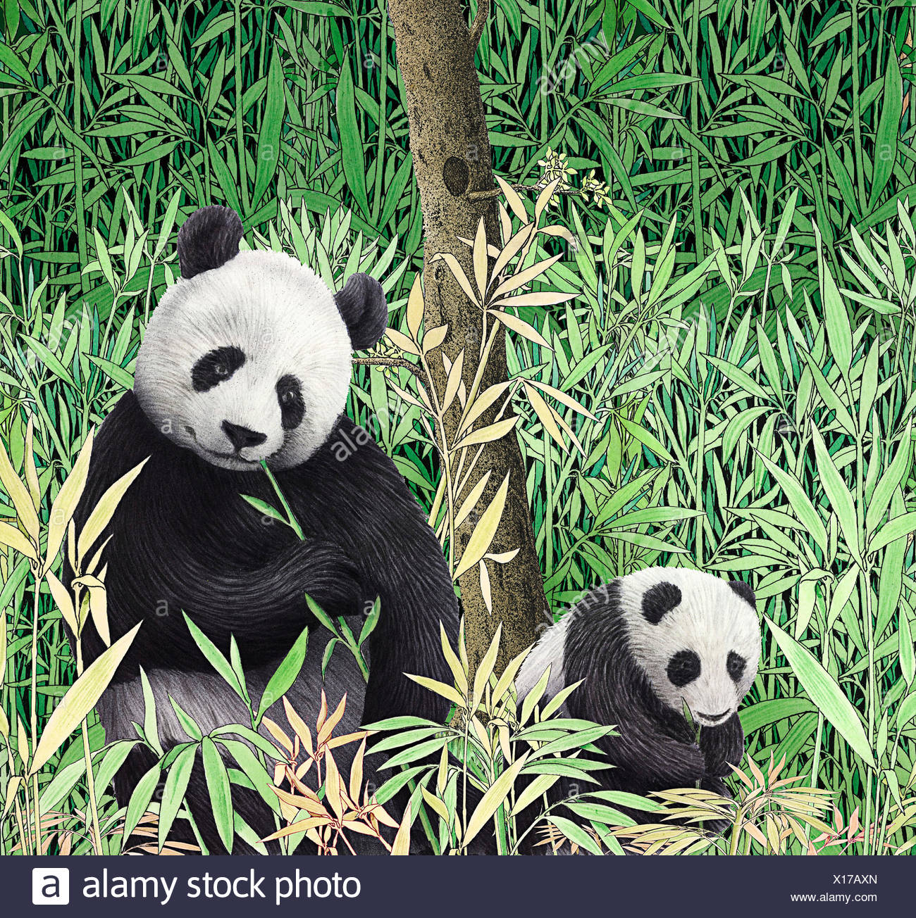 baby pandas eating stock photos baby pandas eating stock images
