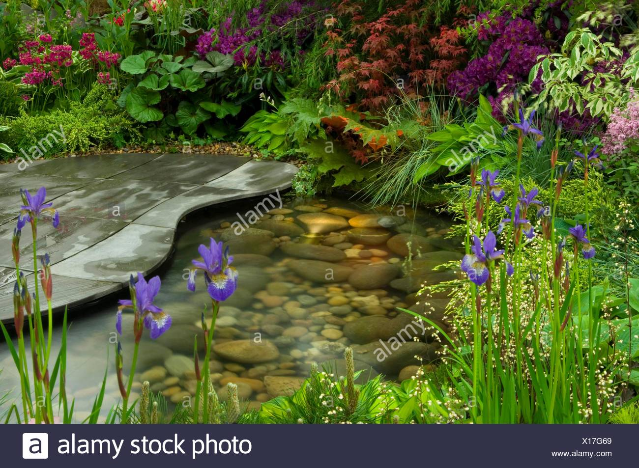 Pool- - (Please credit: Photos Horticultural/Hillier Nurseries)   MIW251128 Stock Photo