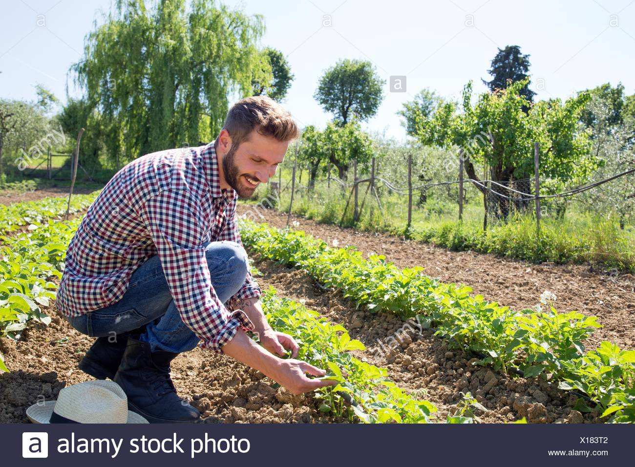 Young man crouched in field tending to tomato plants Stock Photo