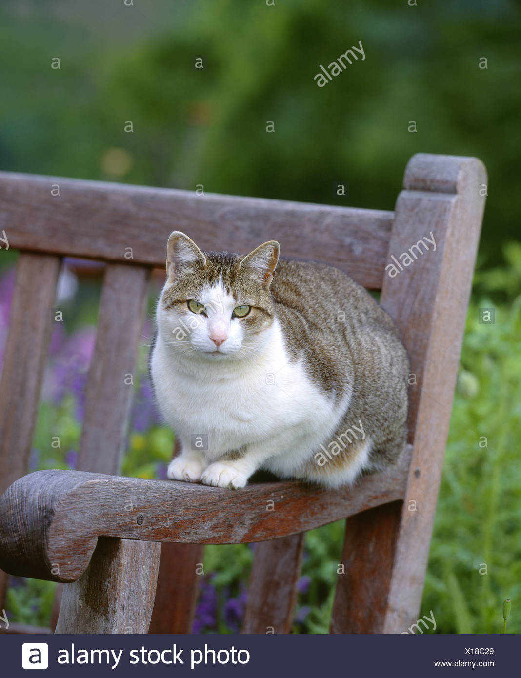 Fine Tabby Cat On Garden Bench Pennsylvania Stock Photo Inzonedesignstudio Interior Chair Design Inzonedesignstudiocom