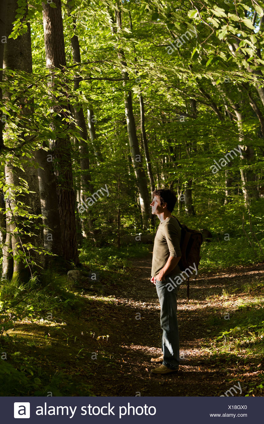 Mature male hiker standing in forest - Stock Image