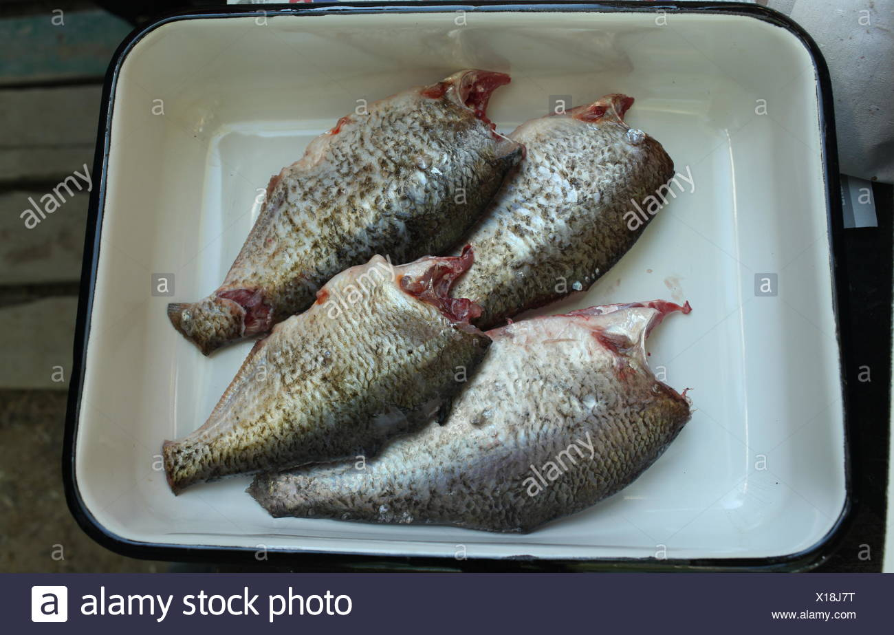 fresh gutted fish - Stock Image