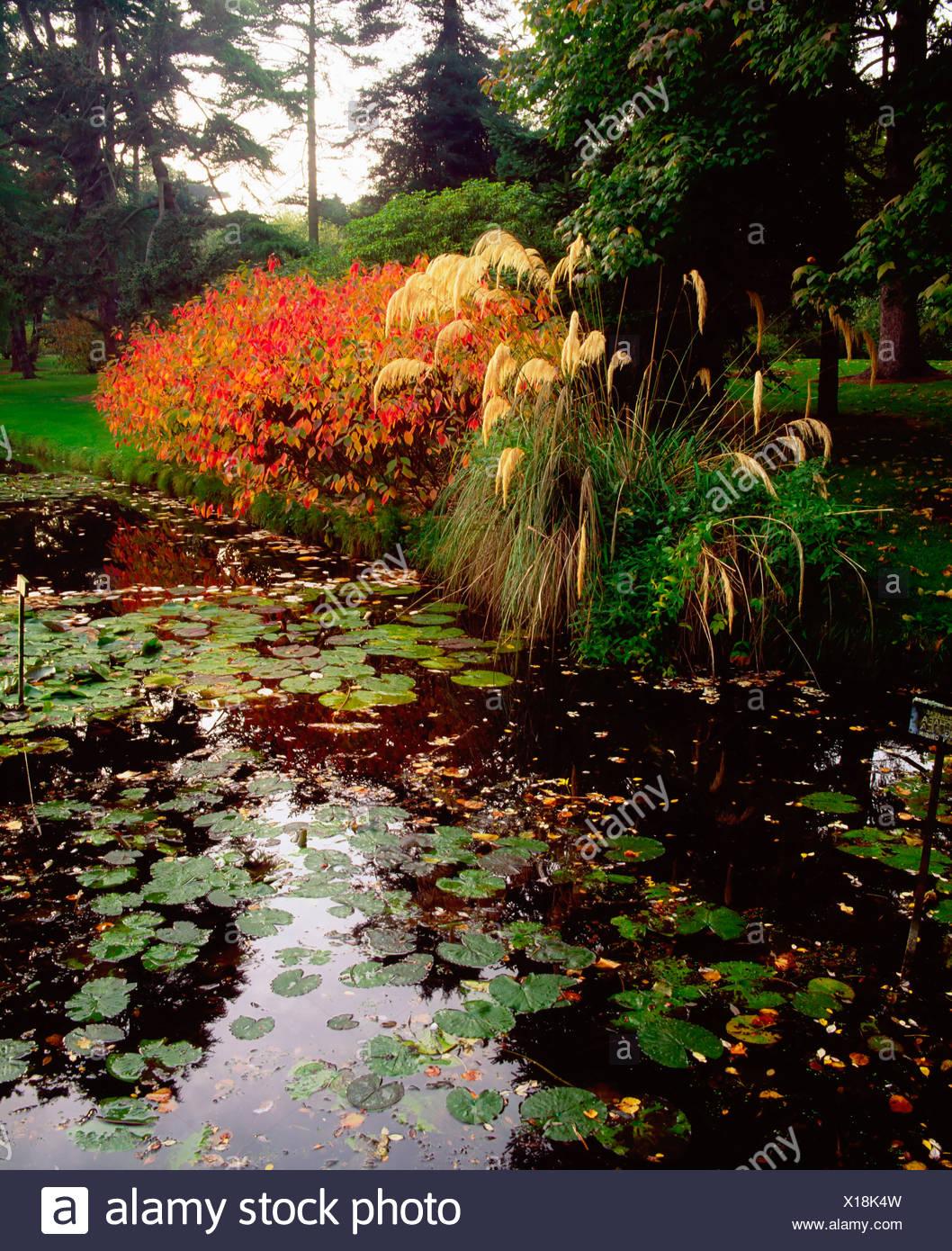 Irish National Botanic Gardens Dublin Stock Photos & Irish National ...