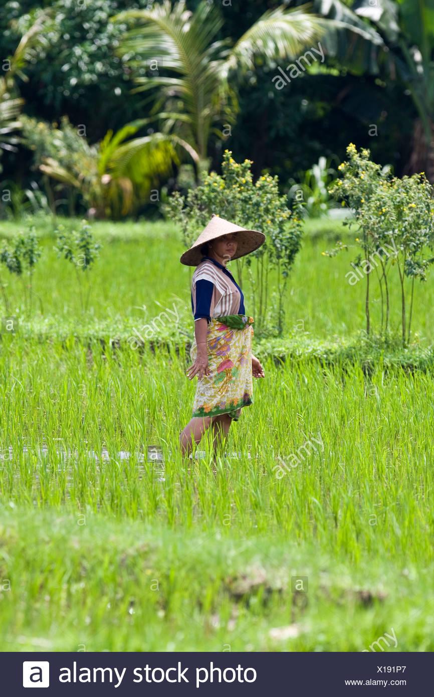 Female rice farmer working a rice field, rice paddy near Gunung Sari, Lombok Island, Lesser Sunda Islands, Indonesia Stock Photo