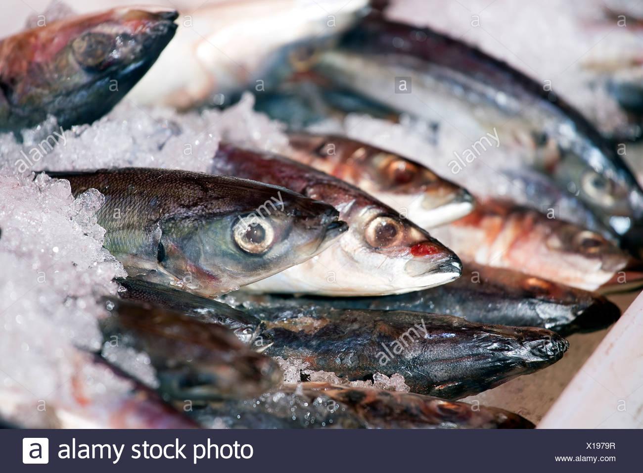 Fresh sardines on ice at the market - Stock Image