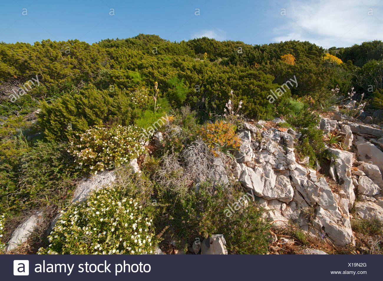 Macchia scrubland, Sardinia, Italy, Europe - Stock Image