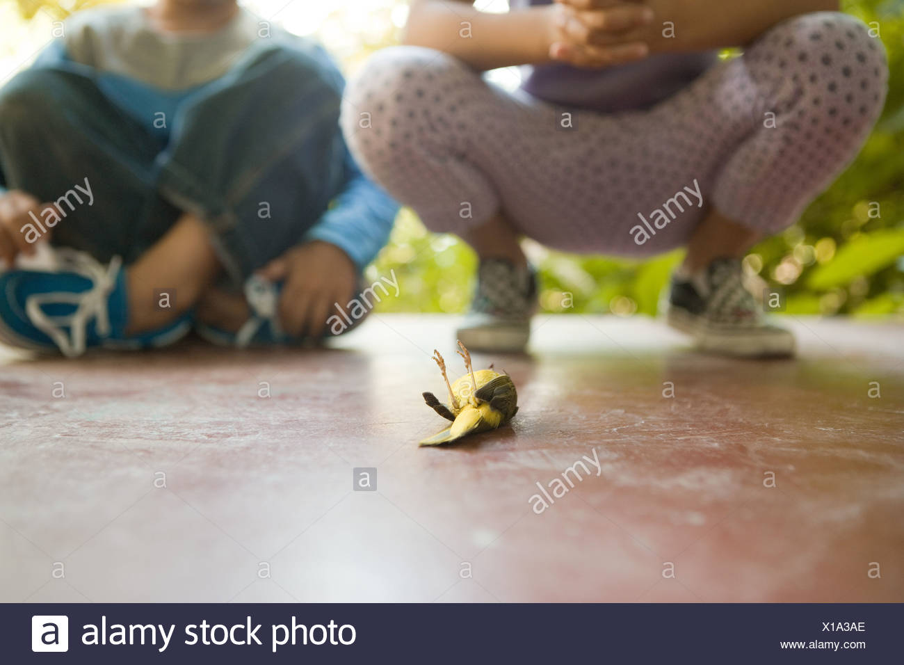 Two children looking at dead bird - Stock Image