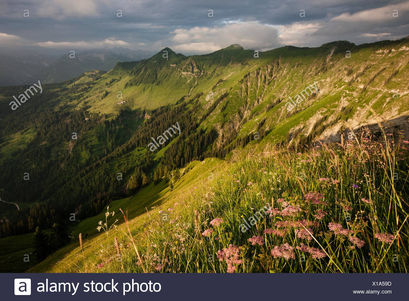 Alpine meadows in summer, Karwendel, stormy atmosphere, Tyrol, Austria - Stock Image