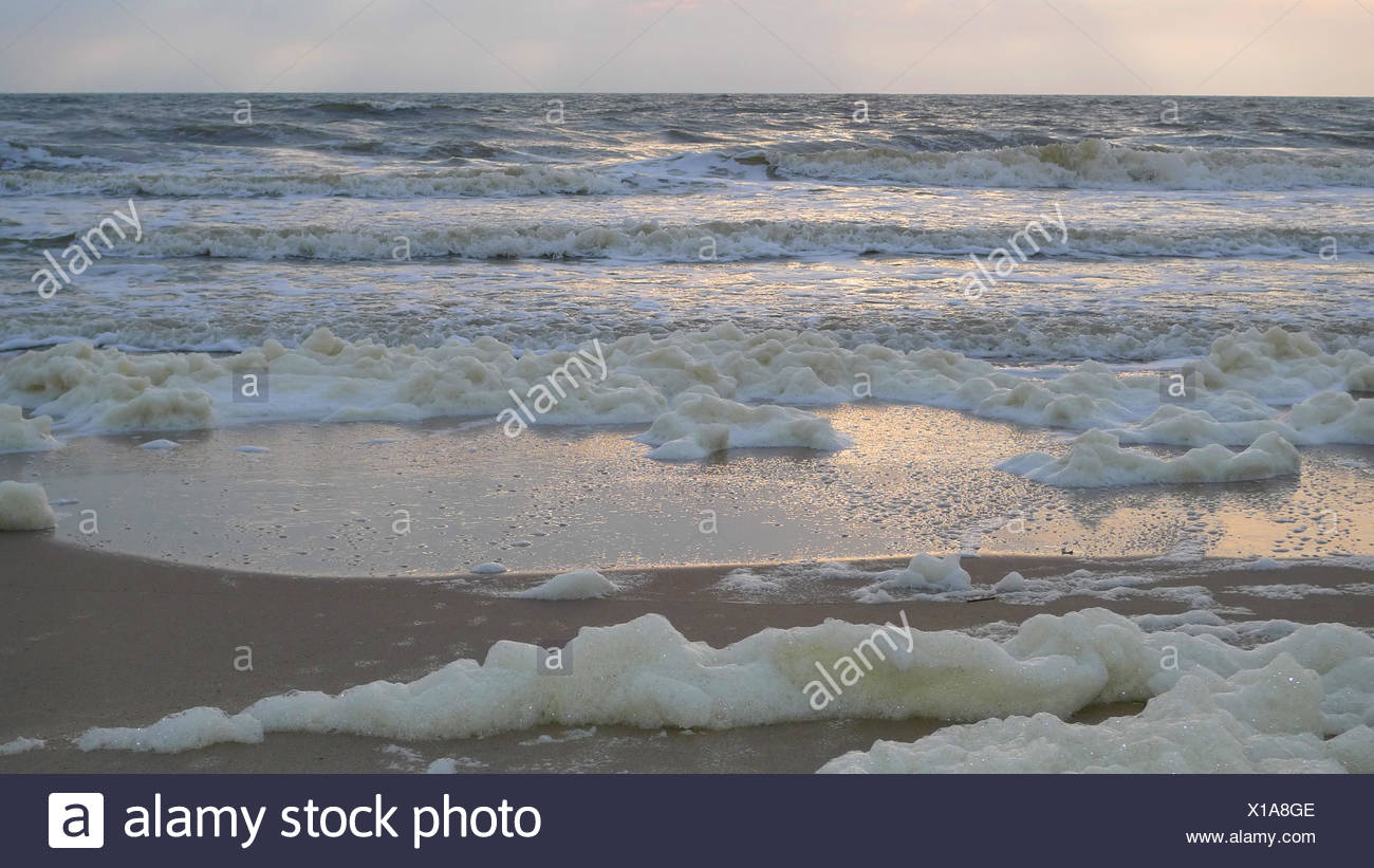 foam on the beach, Spain, Balearen, Majorca - Stock Image