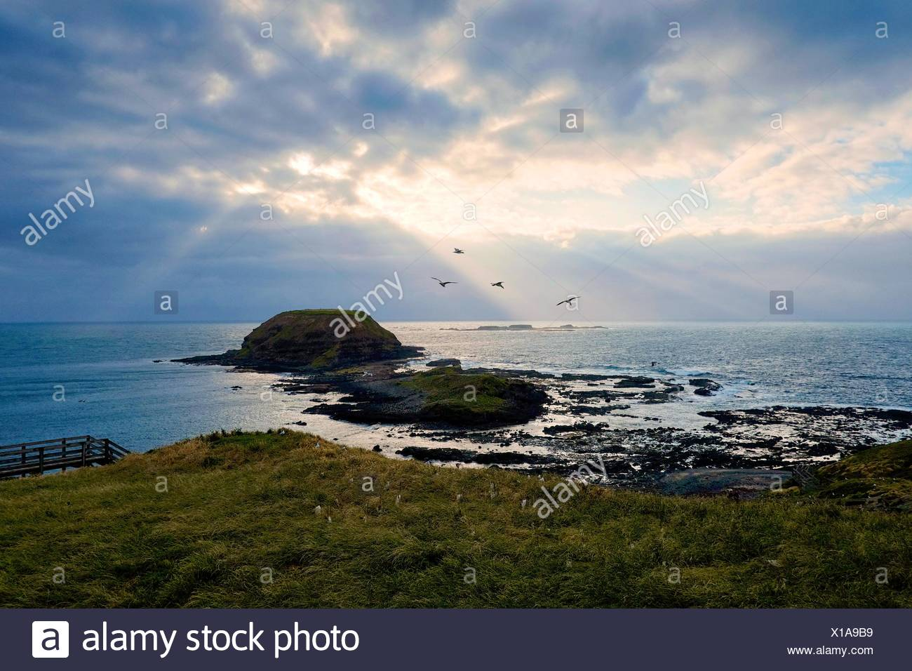 Australia, Phillip Island Nature Park, Rocky shoals seen from grassy shore - Stock Image