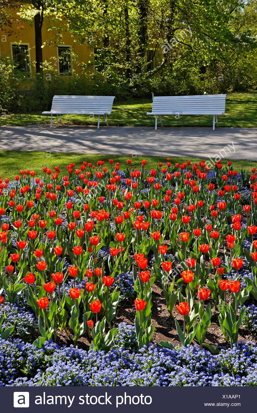 Tulips at Doblhoff Park, Baden, Lower Austria, Austria, Europe Stock Photo