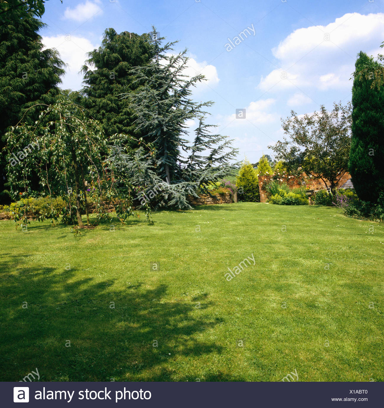 Small weeping pear on lawn in large country garden with spruce and conifers - Stock Image