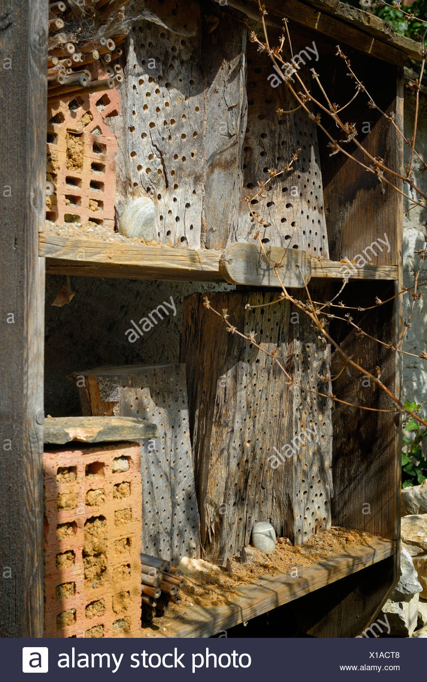 Schaffhausen - nesting place for wild bees and other insects - Switzerland, Europe. - Stock Image