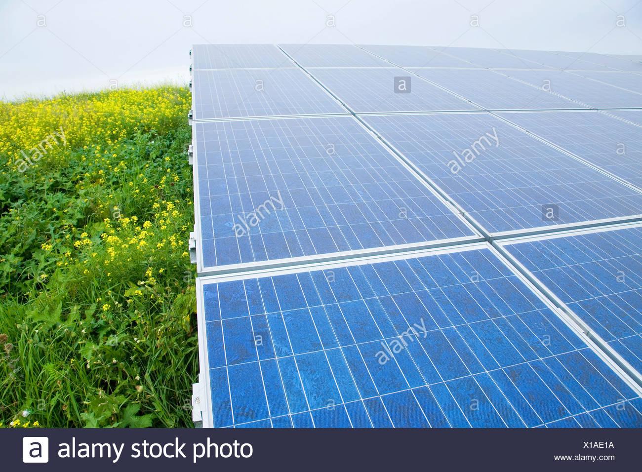 Germany, Bavaria, solar panels - Stock Image