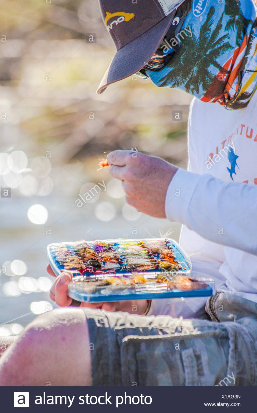 A fly fisherman changes flies while fishing for carp in Montana. Stock Photo