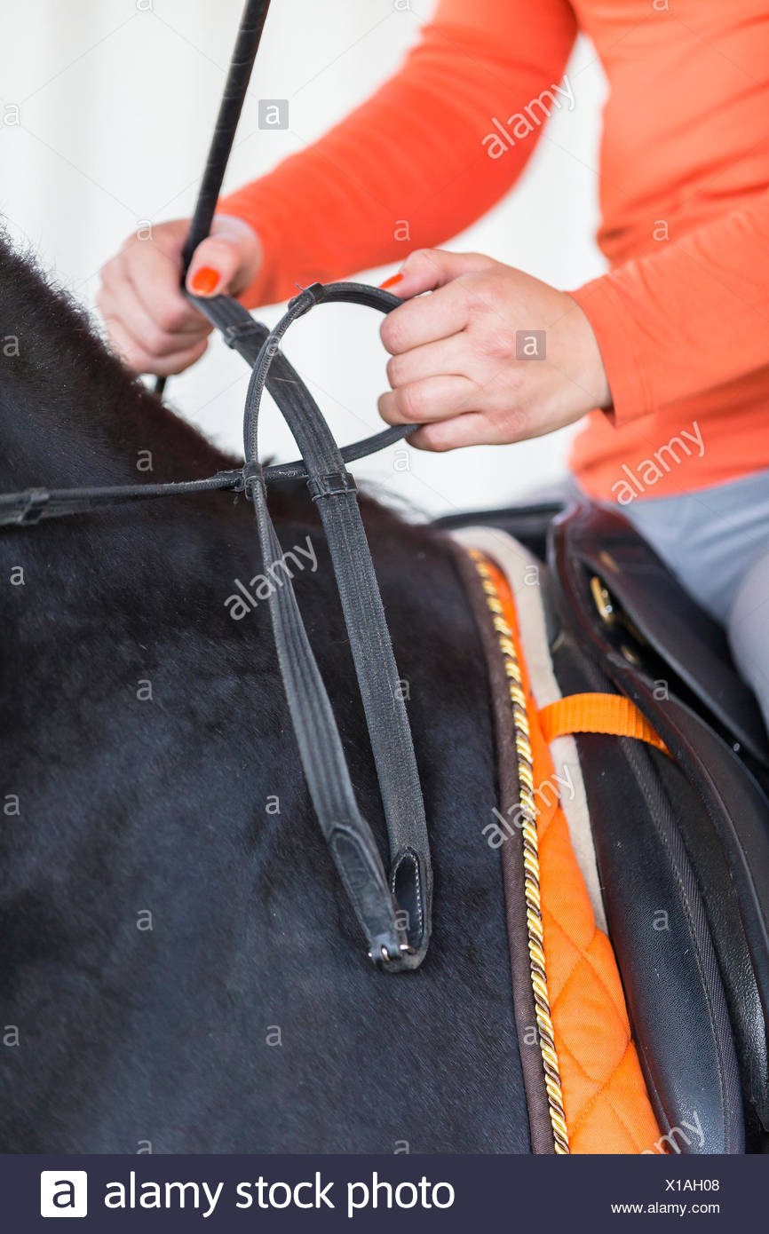 Correct manner holding the reins - Stock Image