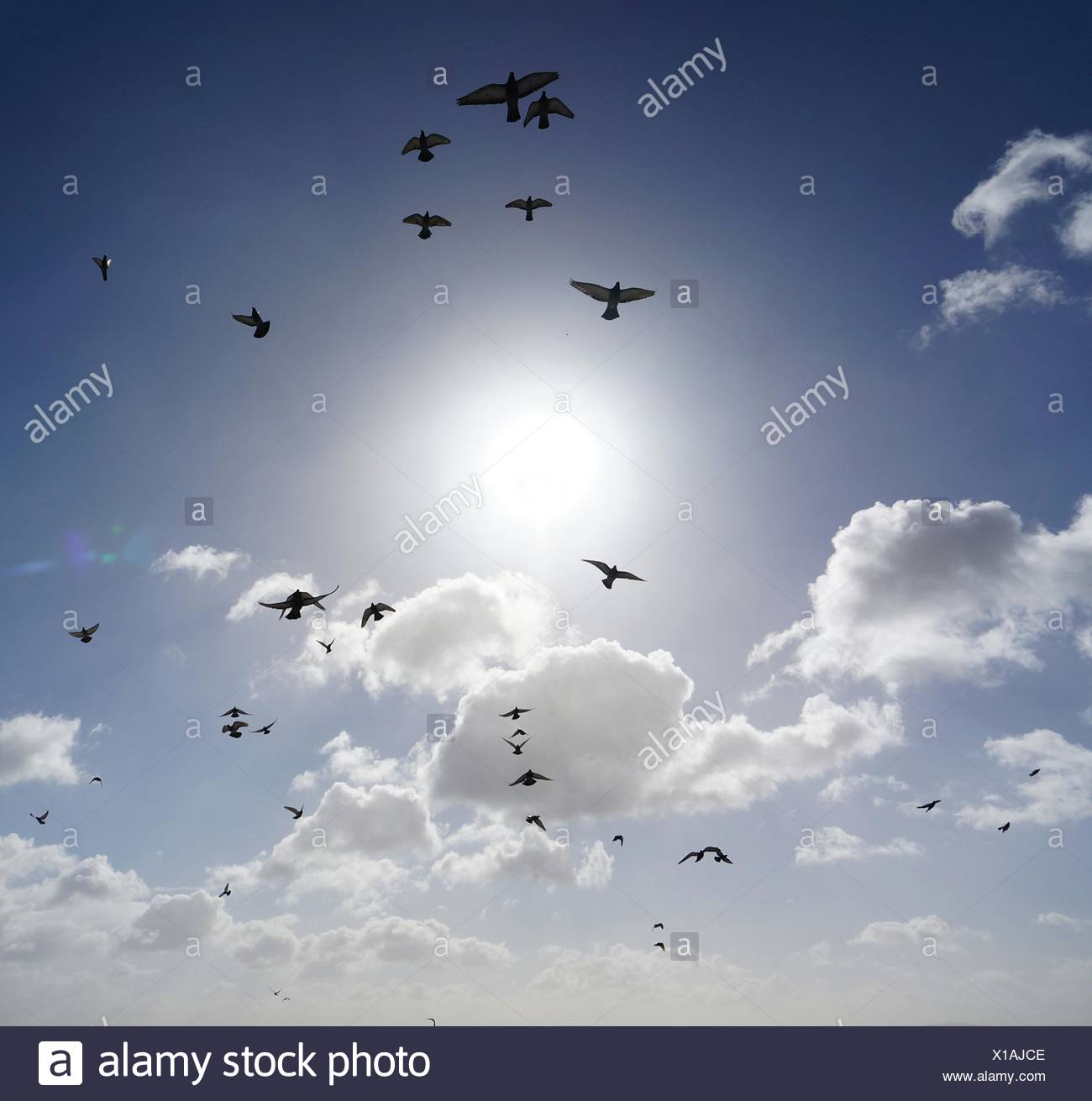 Low Angle View Of Birds Flying Against Sky - Stock Image