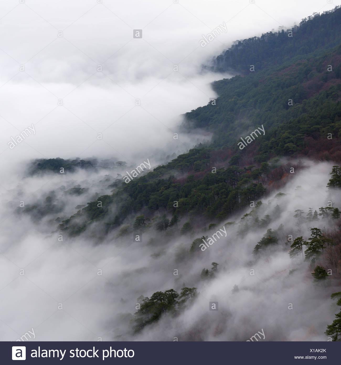 ai-petri mountain landscape on crimea - Stock Image