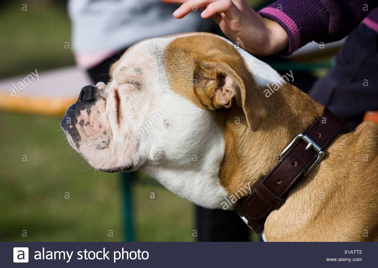 Girl stroking her dog, Germany - Stock Image