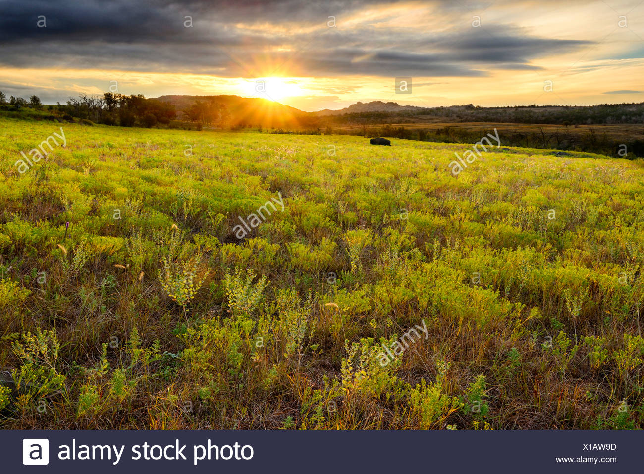 USA, United States, America, North America, Oklahoma, Comanche, Wichita, mountains, refuge, nature, landscape, grass, grassland, Stock Photo