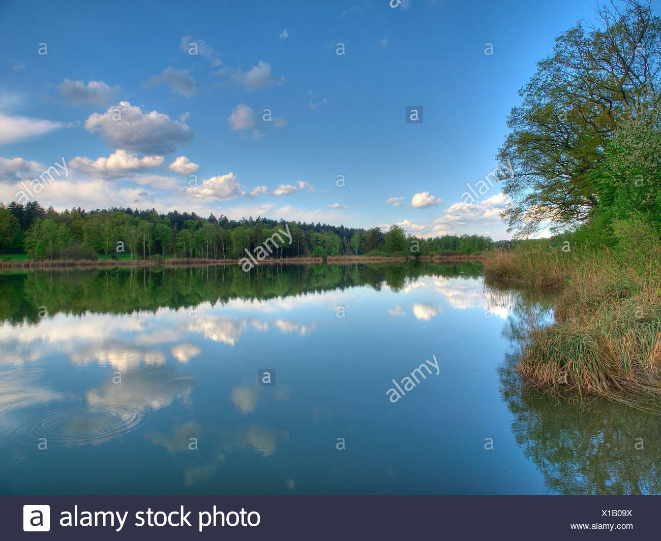 Blue, spring, himmel, idyl, lake, wood, forest, water, clouds, canton Zurich, Switzerland, Husemersee, lake, Ossingen, - Stock Image