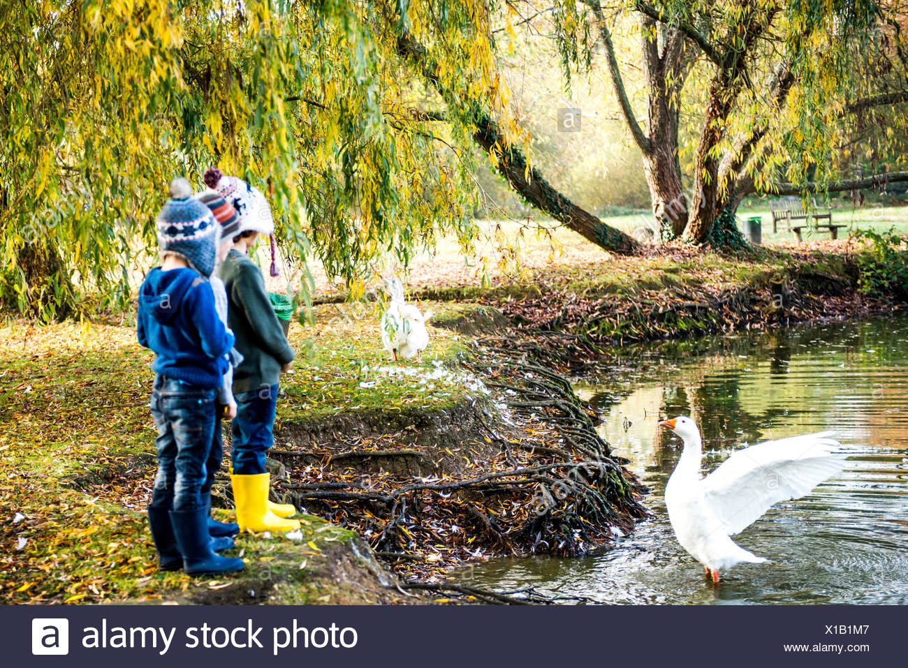 Three young boys, standing beside lake, watching goose in water - Stock Image