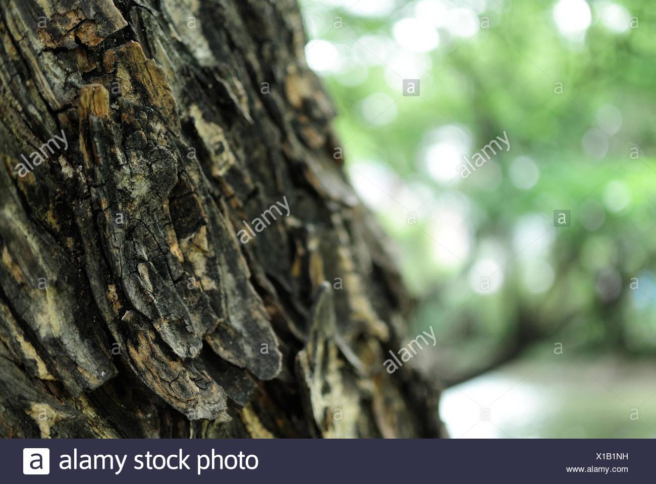 Close Up Tree Bark Textured Stock Photos & Close Up Tree Bark ...