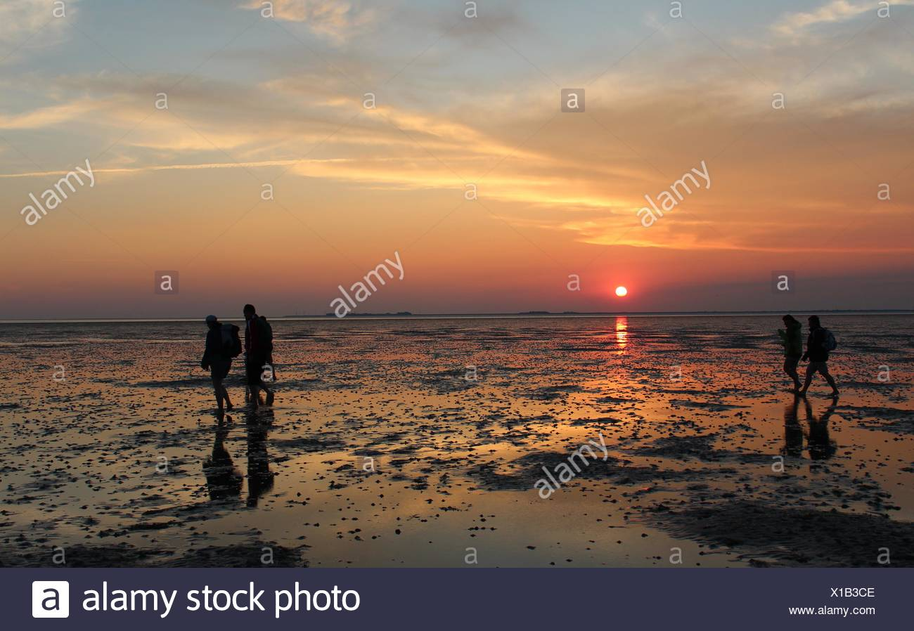 Mud flat wandering at sunset Stock Photo